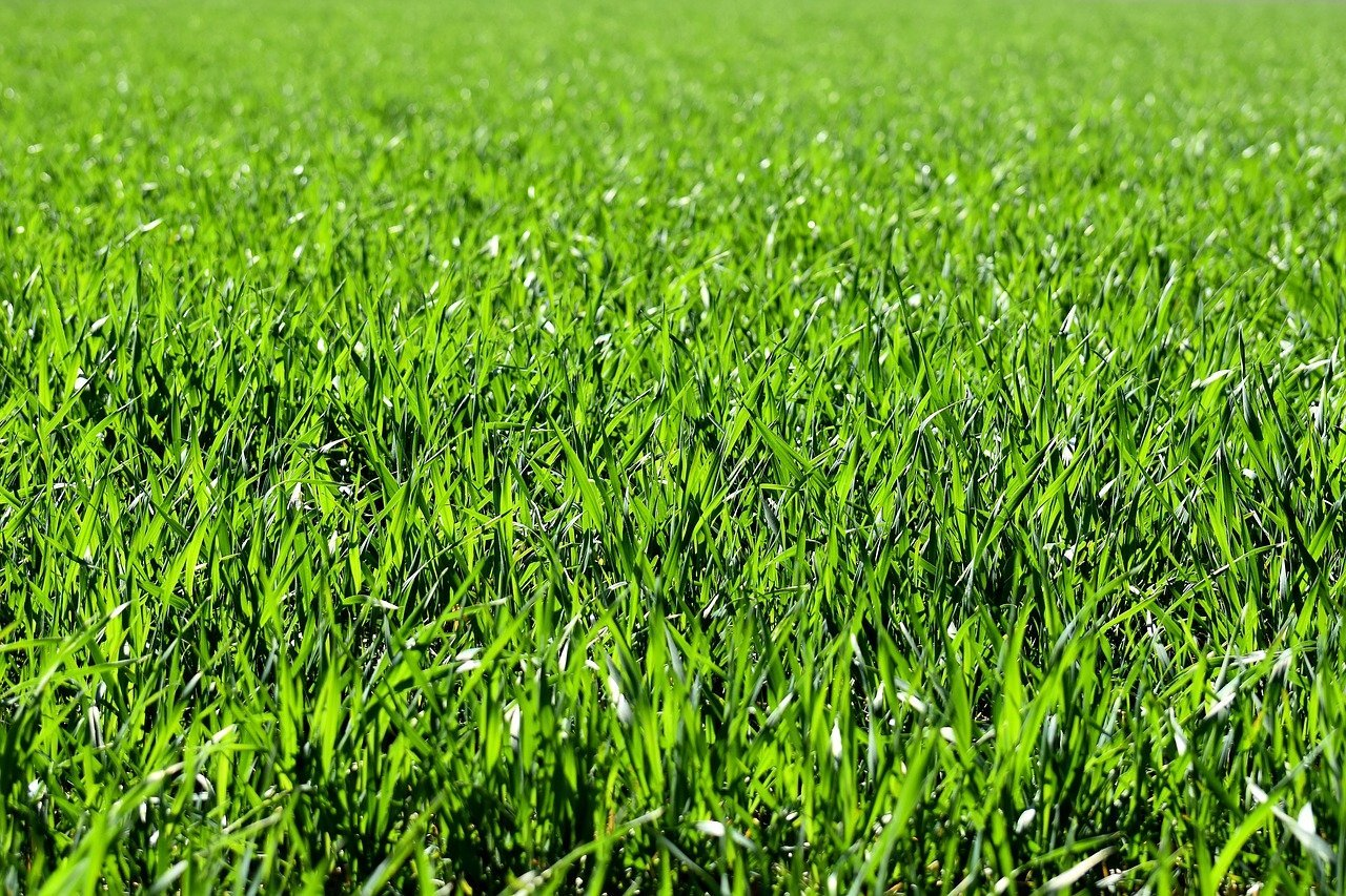 Why the Grass Isn't Always Greener